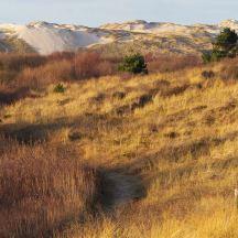 Gouden duinen op Terschelling